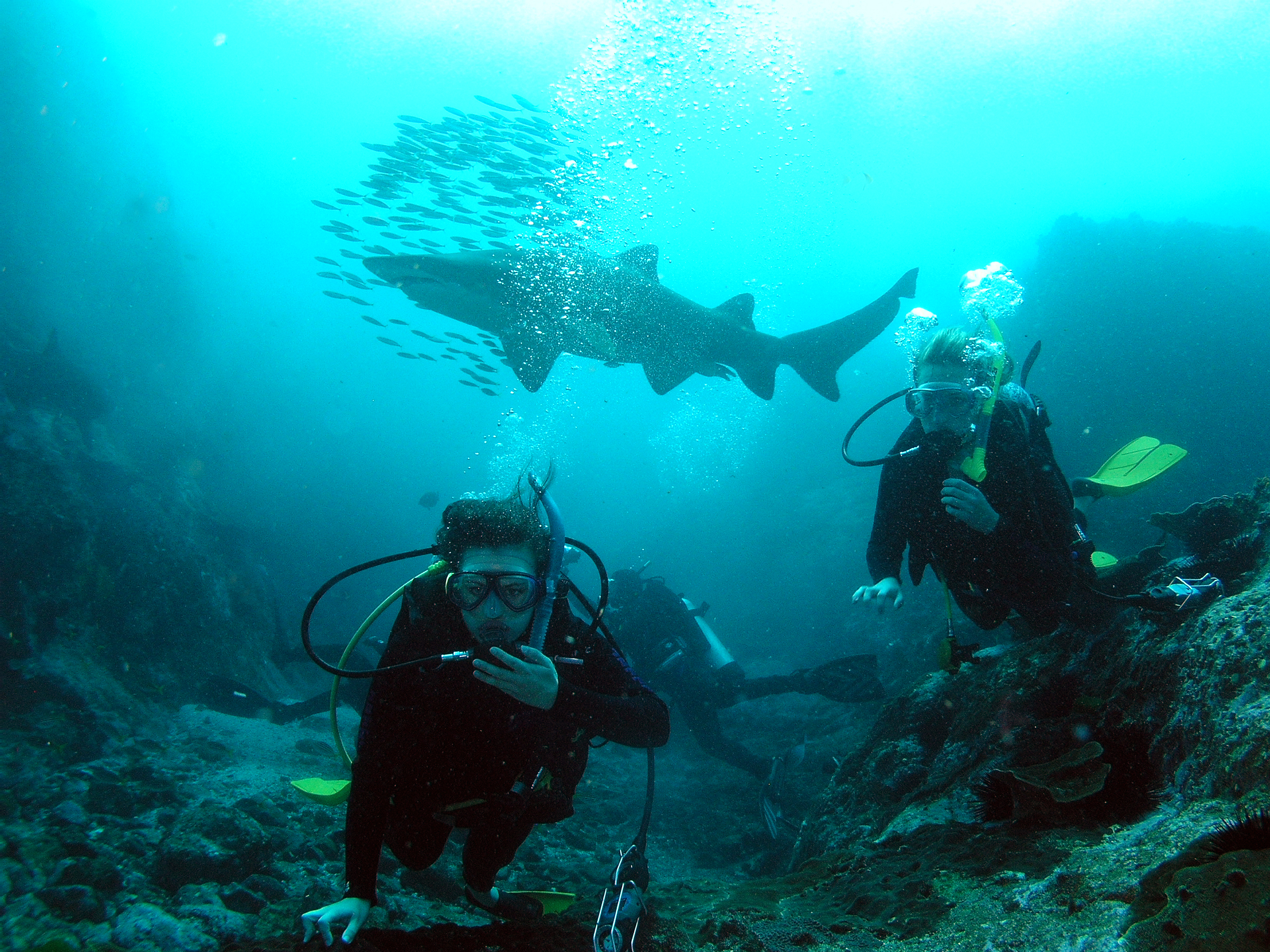 TRIPS! - Diving and Snorkelling