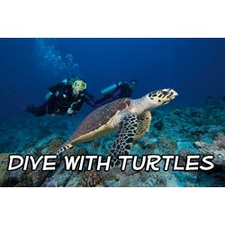 Openwater Diver Course