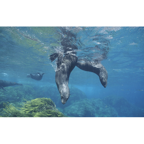 Freediving or Snorkelling Adventure