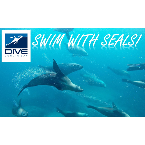 Swim with Whales and Seals