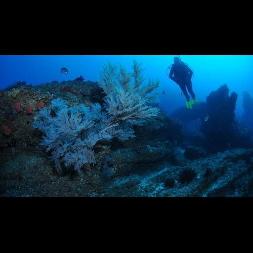 Double Boat Dive - Special Destination