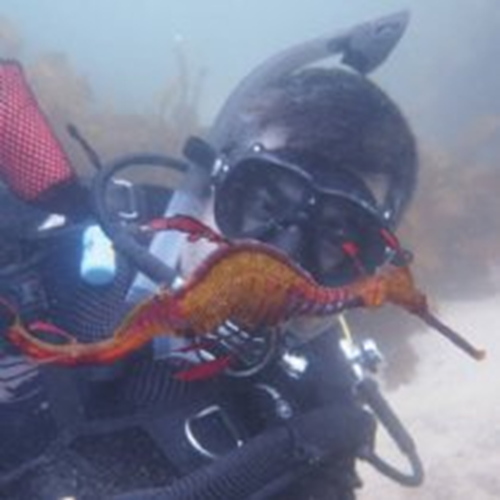 Private Seadragon  Dive