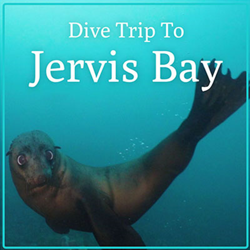 Jervis Bay Dive Trip Gift certificate