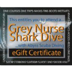 Grey Nurse Shark Dive - Gift Certificate