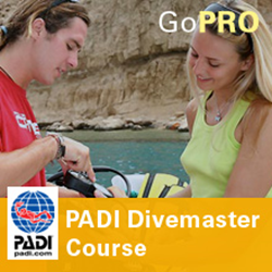Divemaster - Part Time